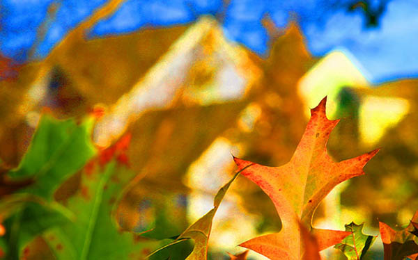 Autumn Upkeep Before Winter