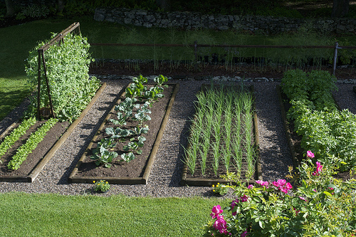 vegetable garden_EHT.jpg