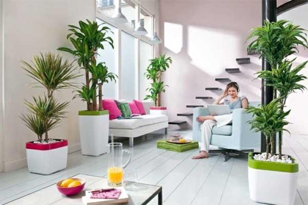 indoor plants in living room